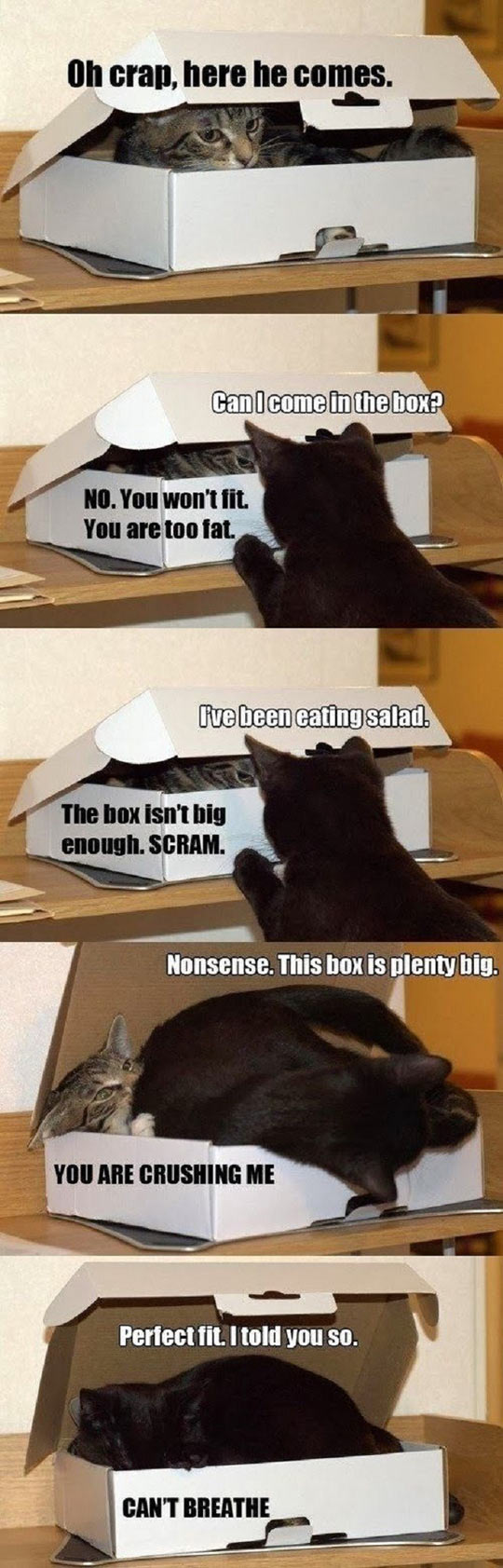 cool-cat-box-annoying-inside