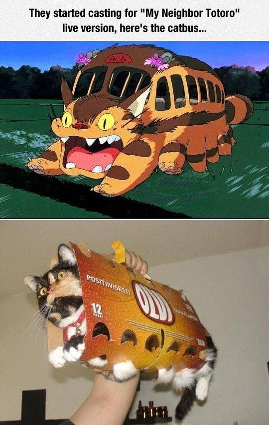 cool-cat-bus-Totoro-cosplay