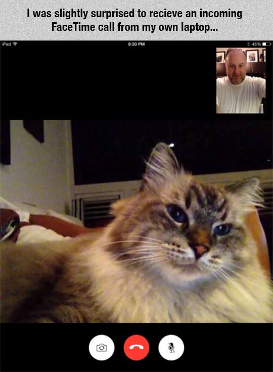 cool-cat-call-Skype-laptop