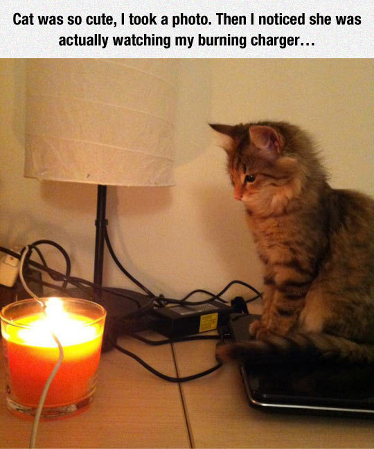 cool-cat-cute-candle-charger-wire