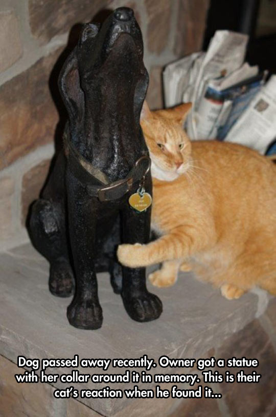 cool-cat-dog-died-statue-collar