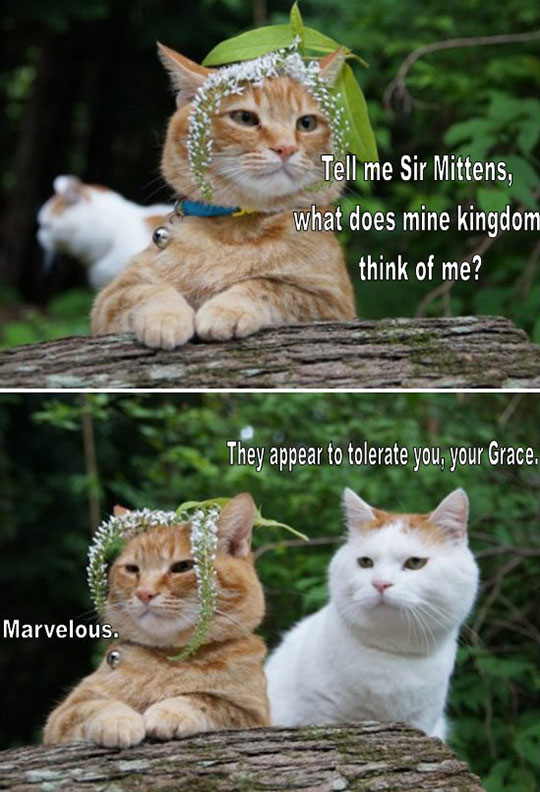 Sir Mittens, Please Tell Me