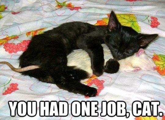 Useless Kitten