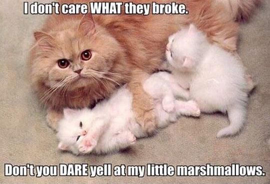 cool-cat-mother-kitten-babies