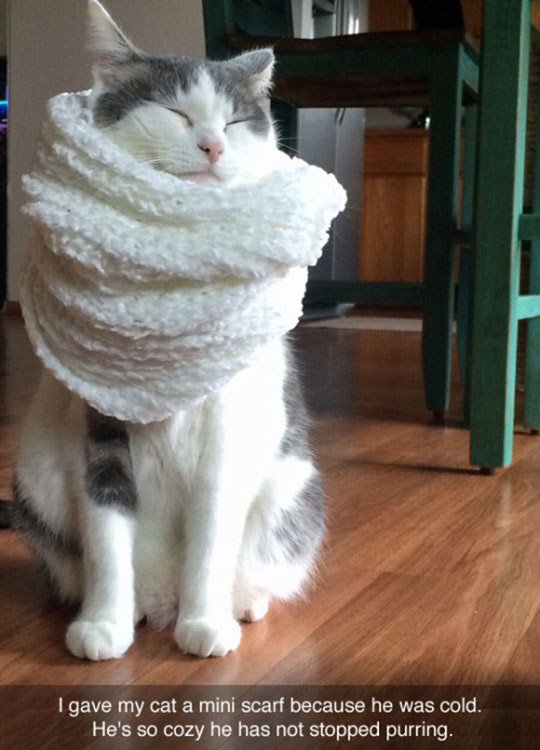 Cozy Kitty Scarf