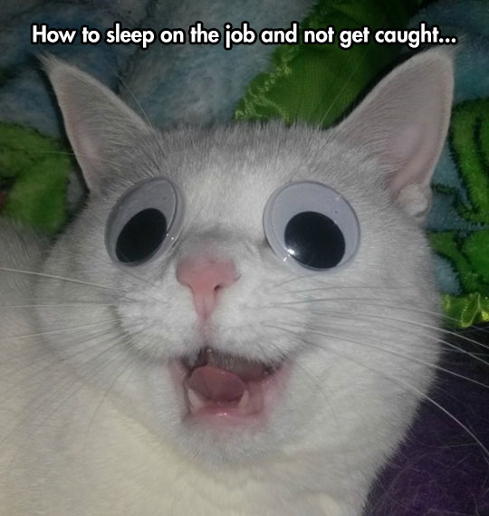 cool-cat-sleeping-googly-eyes