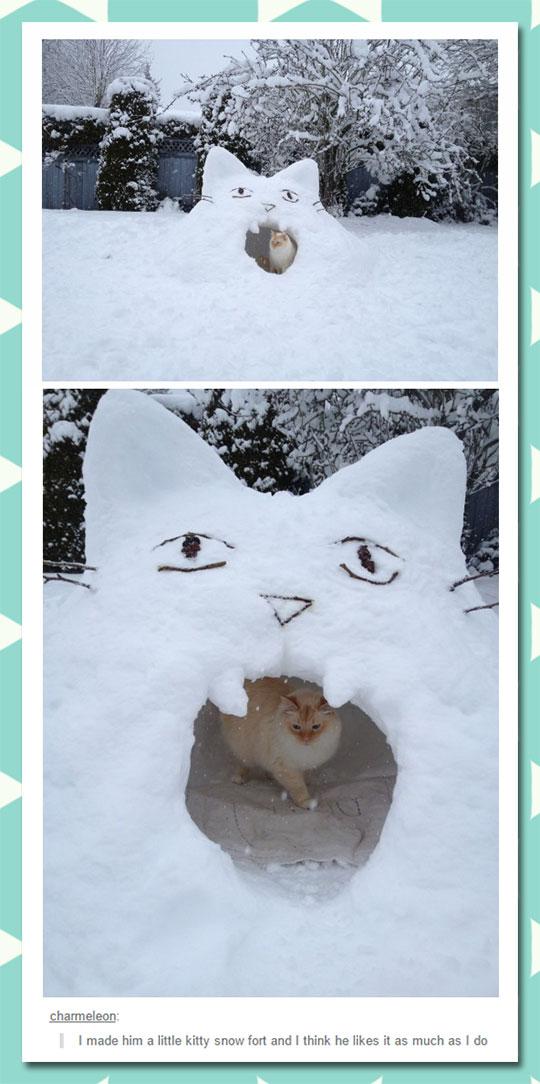 cool-cat-snow-fort-yard