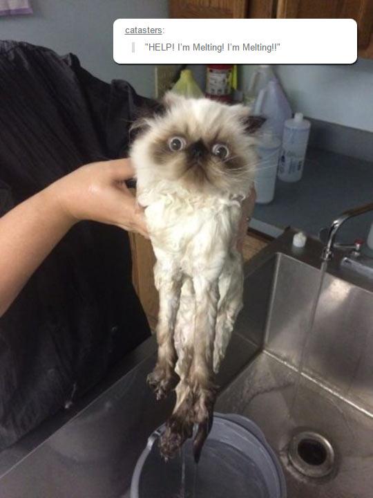 cool-cat-wet-melting-bath-mad