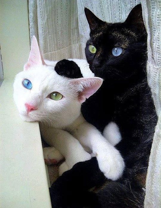 cool-cats-black-white-colors-eyes