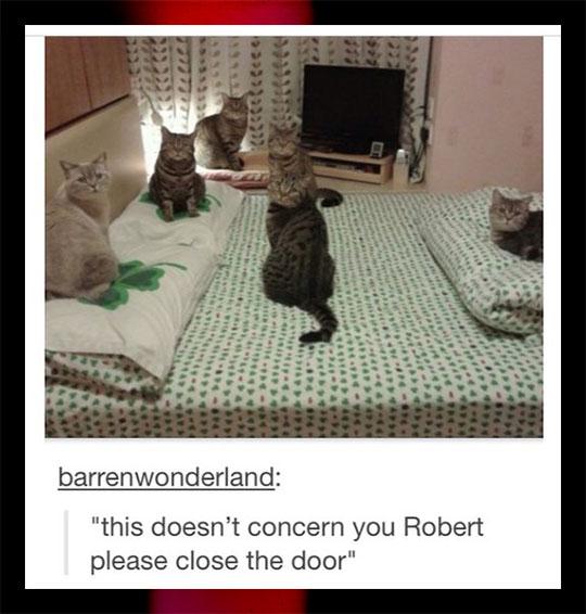 Cat Business In Progress