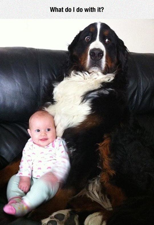 cool-dog-baby-awkward-face