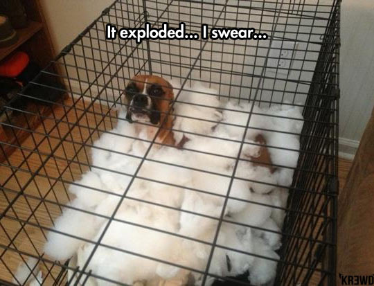 cool-dog-cage-cotton-pillow-destroyed