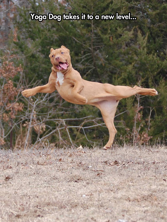 Introducing Yoga Dog