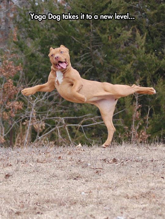 cool-dog-jumping-yoga-moves