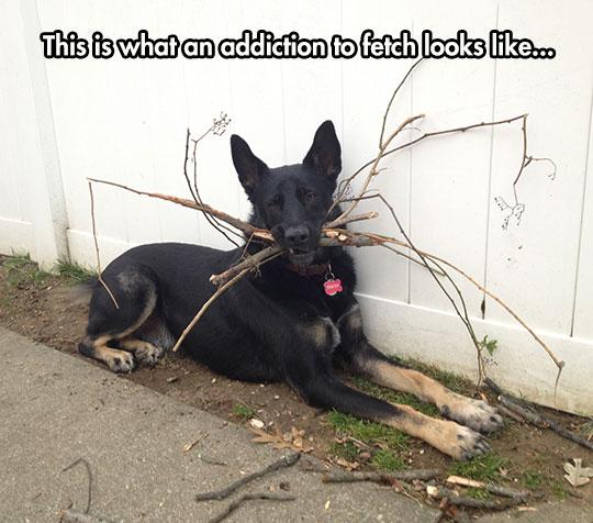 Addiction To Fetch