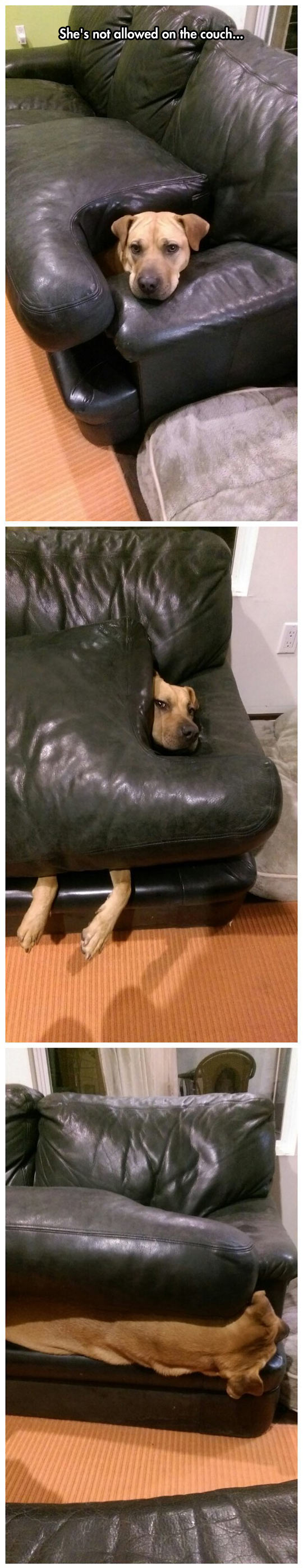 cool-dog-under-pillow-couch