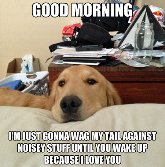 cool-dog-wake-up-noise-love-expression