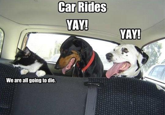 Pets And Car Rides