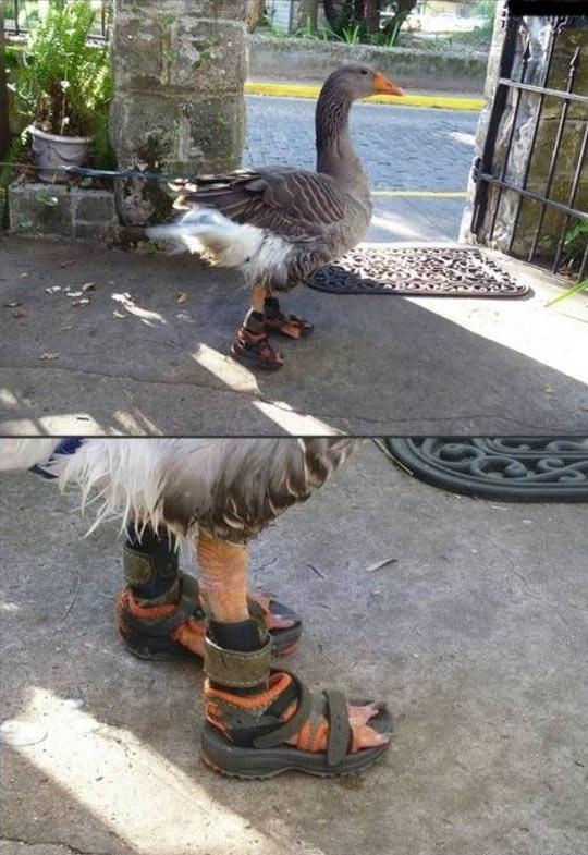 Swag Swan
