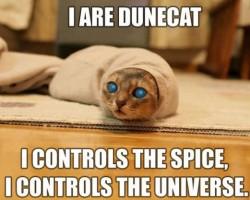 Dune Cat Is Here