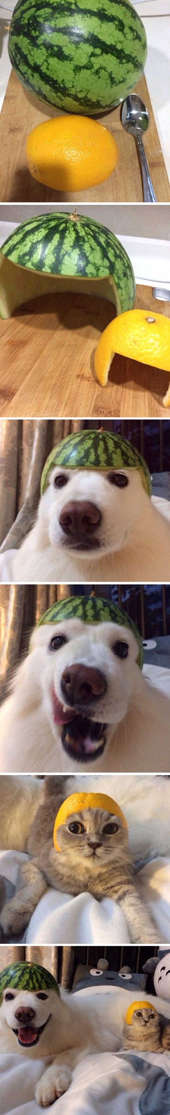 cool-fruits-hats-dog-cat-cutting