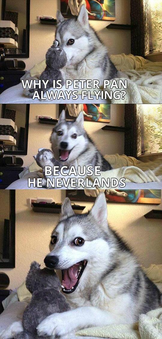 Pun Dog Never Gets Old