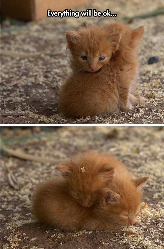 cool-kitten-brothers-hug-love