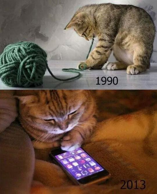 cool-kitty-wool-playing-iPhone