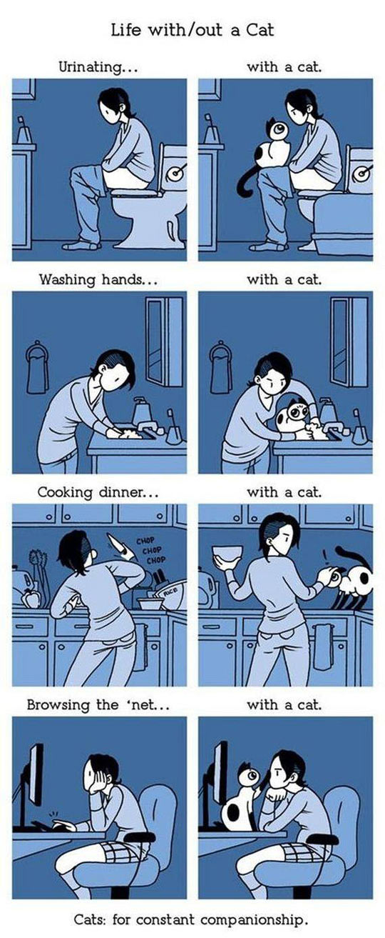 Living With A Cat Is Not Easy