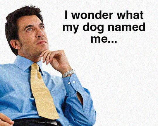 cool-man-office-thinking-dog