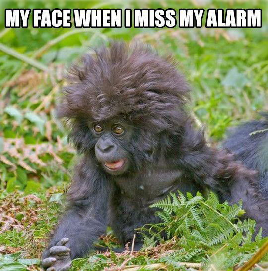 After Hitting That Snooze Button