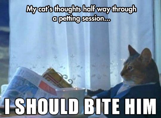 Feline Thoughts