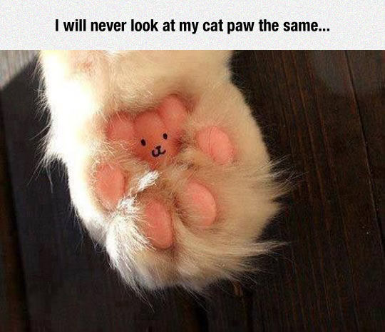 cool-paw-cat-shape-bear