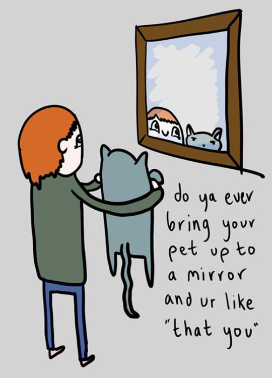 cool-pet-mirror-cat-reflection