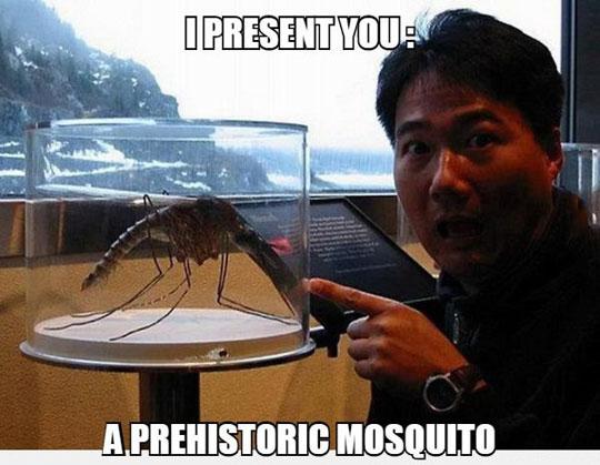 cool-prehistoric-mosquito-museum-surprised