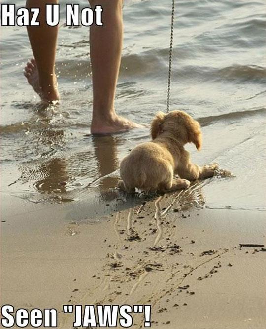 cool-puppy-afraid-water-leash