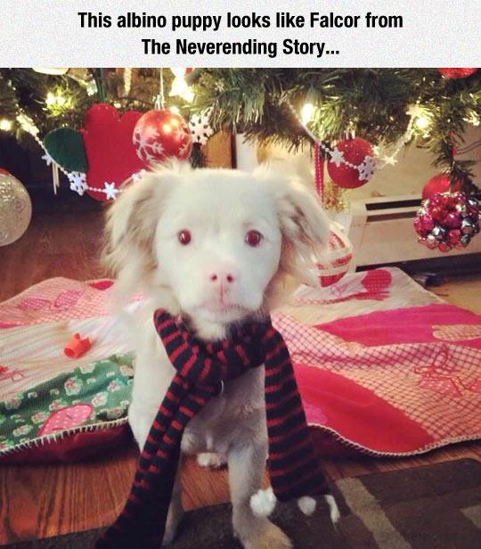 cool-puppy-albino-scarf-Falcor-lookalike