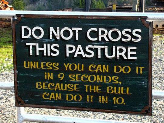 cool-sign-bull-run-pasture-warning