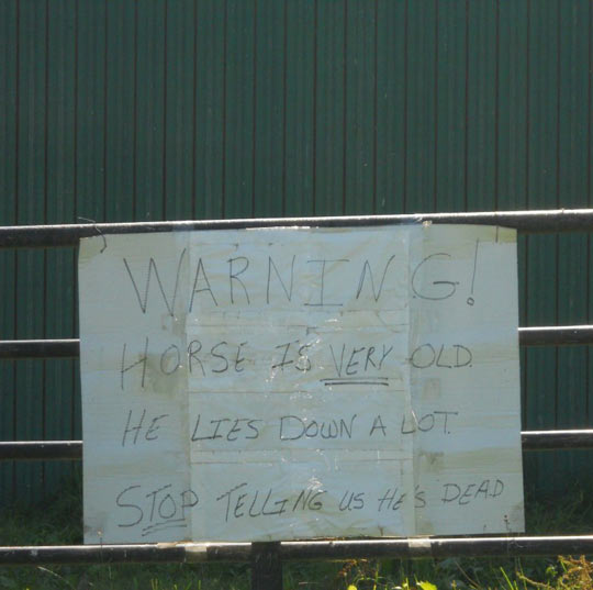 cool-sign-warning-horse-lies-down