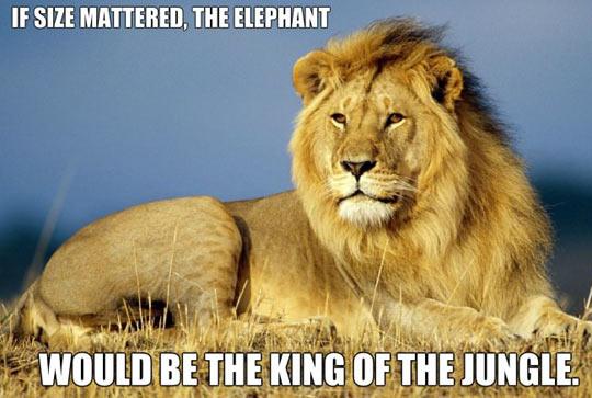 cool-size-animals-lion-elephant