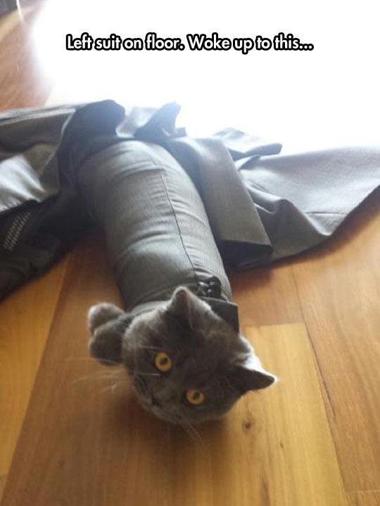 cool-suit-floor-cat-stuck