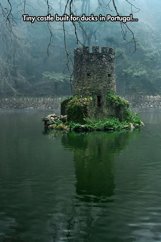 cool-tower-lake-castle-ducks