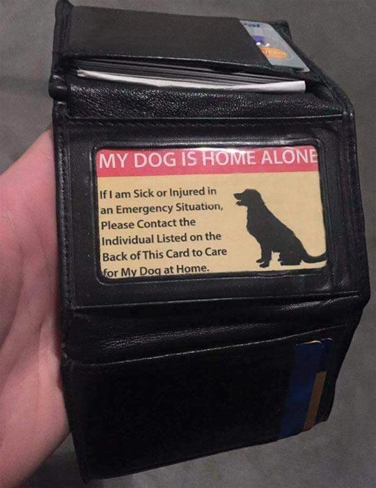 cool-wallet-dog-card