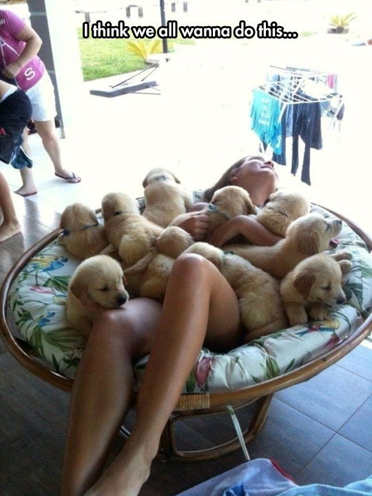 cute-puppy-chair-happiness