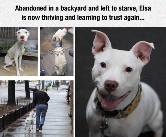dog-abandoned-starve-rescue