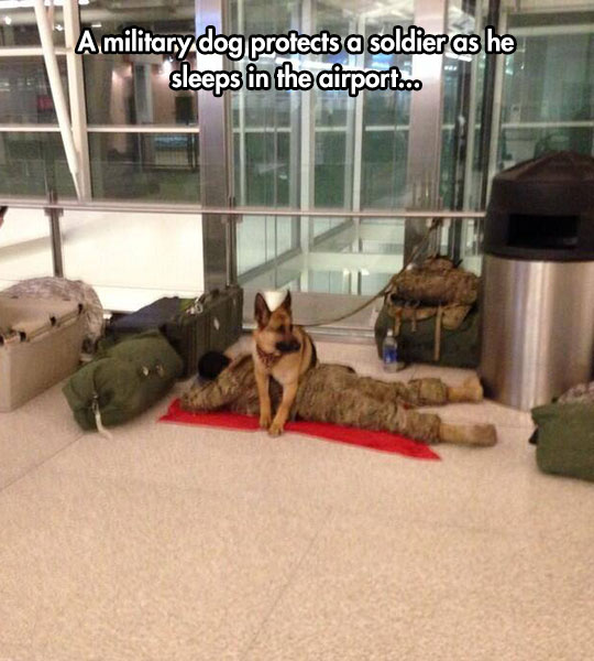 dog-protecting-sleeping-soldier-airport