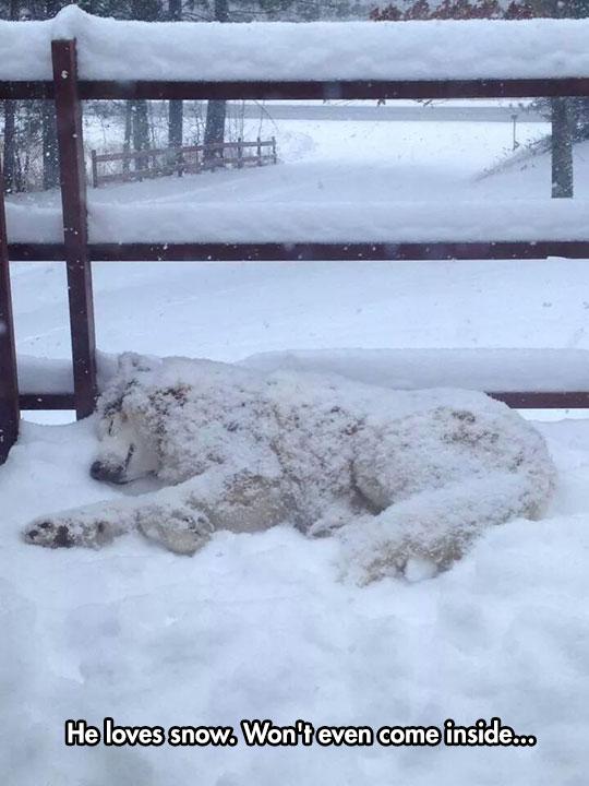 dog-sleeping-snow-winter