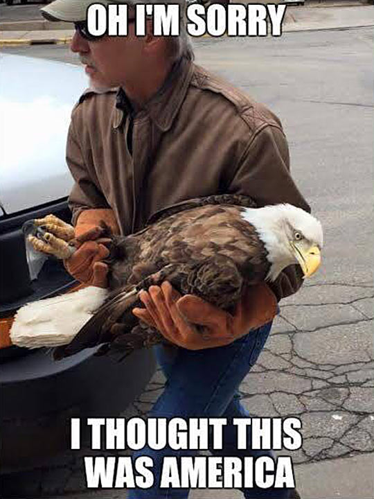 Bald Eagle Rescued From A School