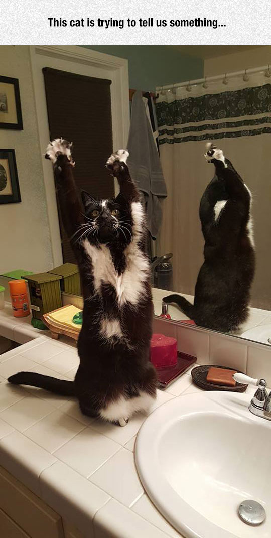 funny-cat-preach-arms-up