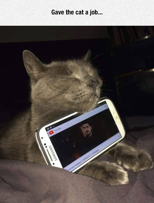 funny-cat-sleeping-cell-phone